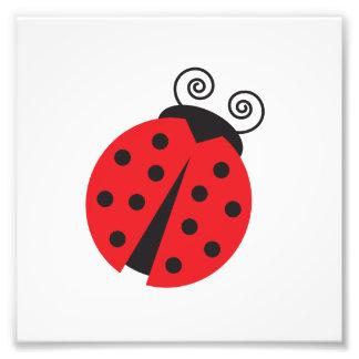Cute Little Ladybug Photograph