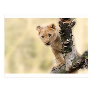 CUTE LITTLE LION CUB RANGE POSTCARD