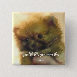 cute little pomeranian 15 cm square badge