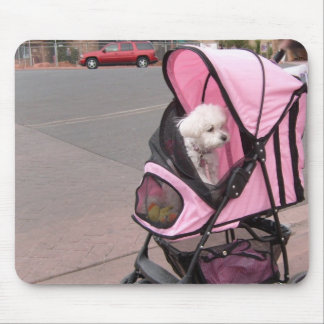 Cute little poodle in a doggie stroller, on a mous mouse mat