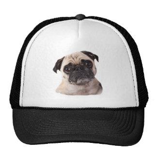 cute little pug dog cap
