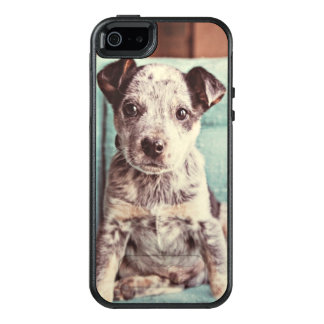 Cute Little Puppy On Teal Chair OtterBox iPhone 5/5s/SE Case