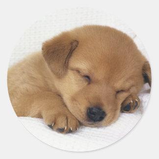 Cute little puppy round sticker