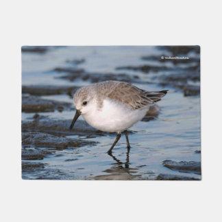 Cute Little Sanderling at the Beach Doormat