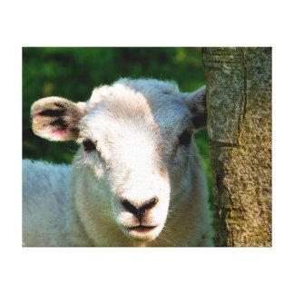 CUTE LITTLE SHEEP CANVAS PRINT
