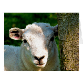 CUTE LITTLE SHEEP LARGE GREETING CARD
