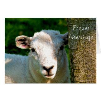 CUTE LITTLE SHEEP GREETING CARD