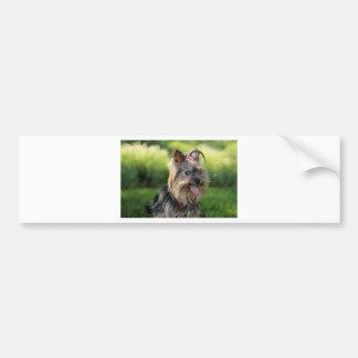 Cute Little Yorkshire Terrier Dog Bumper Stickers