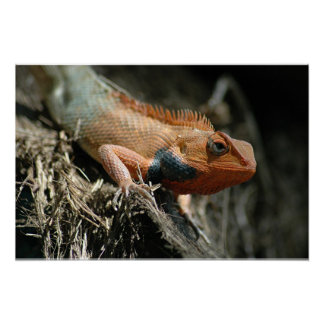 Cute Lizard Poster