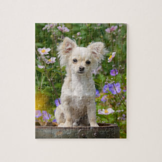 Cute long-haired cream Chihuahua Dog Puppy - Game Jigsaw Puzzle