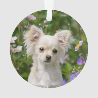 Cute long-haired cream Chihuahua Dog Puppy Photo Ornament