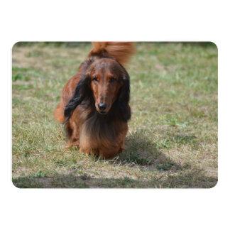 Cute Long Haired Daschund 13 Cm X 18 Cm Invitation Card