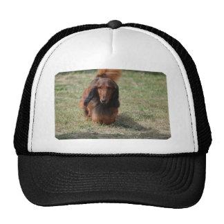 Cute Long Haired Daschund Cap