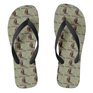 Cute Long Haired Daschund Flip Flops