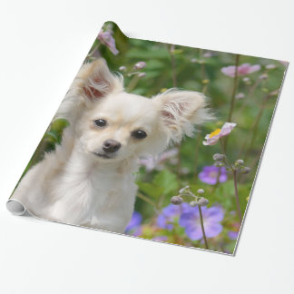 Cute longhair cream Chihuahua Dog Puppy Pet Photo Wrapping Paper