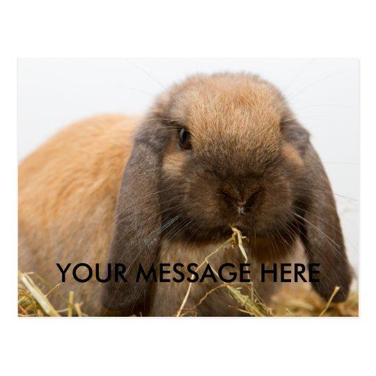 Cute lop eared bunny postcard