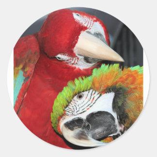 Cute macaws classic round sticker