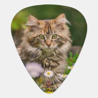 Cute Maine Coon Kitten Cat Flower Meadow  Plectrum