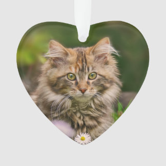 Cute Maine Coon Kitten Cat in a Flower Meadow ;; Ornament
