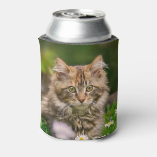 Cute Maine Coon Kitten Cat in a Meadow Funny Bawdl Can Cooler