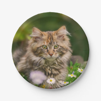 Cute Maine Coon Kitten Cat in a Meadow Funny Party 7 Inch Paper Plate