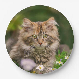 Cute Maine Coon Kitten Cat in a Meadow Happy Party 9 Inch Paper Plate