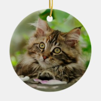 Cute Maine Coon kitten Christmas Ornament