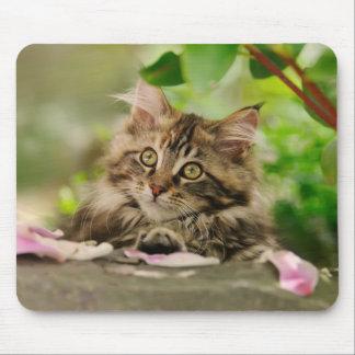 Cute Maine Coon kitten Mousepads