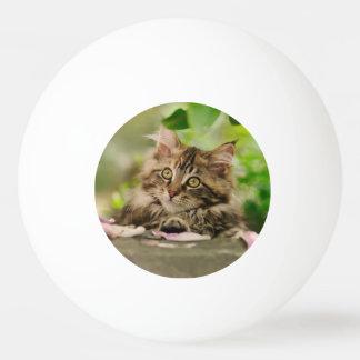 Cute Maine Coon kitten Ping Pong Ball