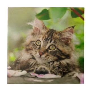 Cute Maine Coon kitten Tile