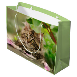 Cute Maine Coon Kitten, wrap Large Gift Bag