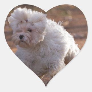 Cute Maltese Dog Heart Sticker