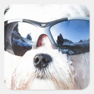 Cute Maltese Dog Square Sticker