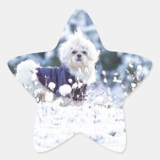 Cute Maltese Dog Star Sticker