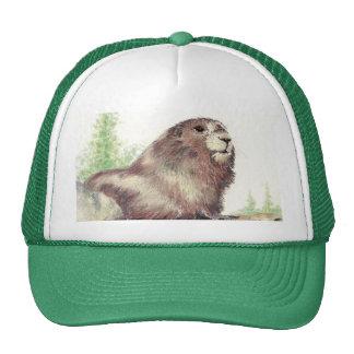 Cute Marmot, Nature, Wildlife, Animal Cap