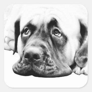 Cute Mastiff dog Square Sticker