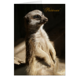 """Cute Meerkat """"Patience"""" Any Occasion Greeting Card"""