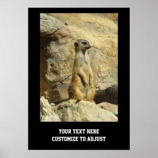 Cute meerkat photograph poster