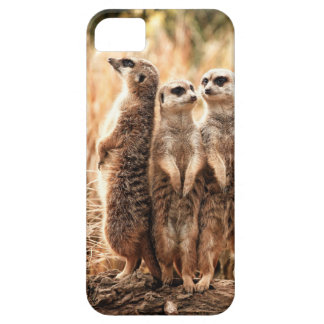 Cute Meerkats Barely There iPhone 5 Case