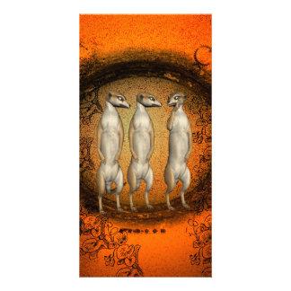 Cute meerkats in a hole customized photo card