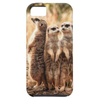 Cute Meerkats iPhone 5 Case