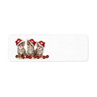 Cute Merry Christmas Kittens