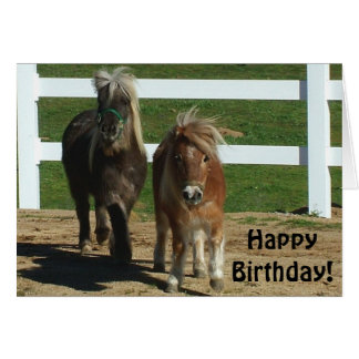 Cute Miniature Horse Birthday Card