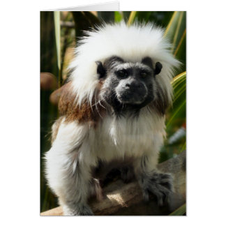 Cute Monkey Card