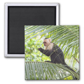 Cute Monkey on a Palm Tree Square Magnet