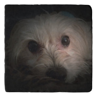 Cute Morkie Puppy Dog Adorable Marvel Stone Trivet