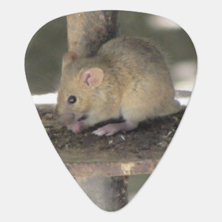 Cute Mouse Sneaking a Meal Plectrum