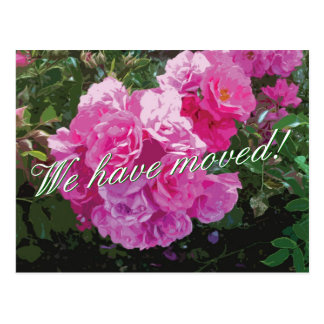 Cute moving postcards with pink rose flowers