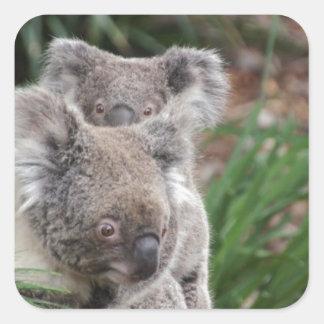 Cute Nature Jungle Tree Safari Koala Animals Bear Square Sticker