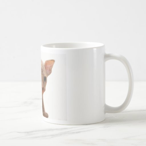 Cute newborn sphynx kitten coffee mug